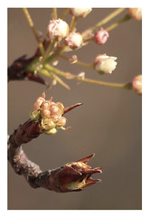 Harbinger of Spring Weather (Day Night Tripper) Tags: california flowers trees sunset urban plants sun mountains color nature floral beauty grass leaves gardens rural sunrise design landscapes spring flora rocks graphic landscaping vibrant scenic trails hills bulbs wildflowers roads kpa shrubs brilliant slo blackeyedsusans taft grasslands bakersfield springtime valleys sanluisobispocounty annuals hillsides kerncounty perinnials