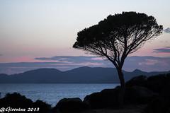 Mediterrniament. (Montse.P) Tags: sardegna sunset red sea rouge mar sardinia bue bleu pi vermell blau pino cerdea capvespre mediterrnia cerdenya