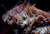 reeeeeeef. (moloko-vell0cet) Tags: ocean toronto ontario water coral museum photoshop canon lens rebel tank royal exhibition kit xs reef rom canda cs5