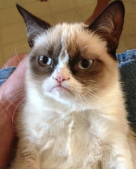 Grumpy Cat (Quernus Crafts) Tags: cute polymerclay grumpycat quernuscrafts tardarsauce