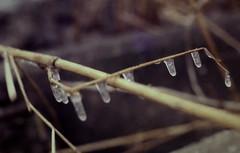 dutch winter (48) (bertknot) Tags: winter dutchwinter dewinter winterinholland winterinthenetherlands hollandsewinter winterinnederlanddutchwinter