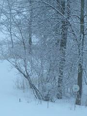 Snow Corner