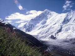 K9 DIRAN FROM ABOVE BASE (RAFMRA) Tags: hunza diran dannydaniel mountainrescue rafmountainrescue rafmrs karakoramconquest93