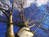 Colors in the sky (Froschkönig Photos) Tags: himmel wolken blau weiss vangogh welle birke filer locken dauerwelle lockenwickler icolorama uploaded:by=flickrmobile flickriosapp:filter=nofilter