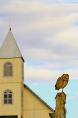 A igreja e a coruja (fabsciack) Tags: brazil church brasil cross cruz igreja owl coruja santacatarina eagleowl fraiburgo rotadaamizade valedocontestado butiaverde