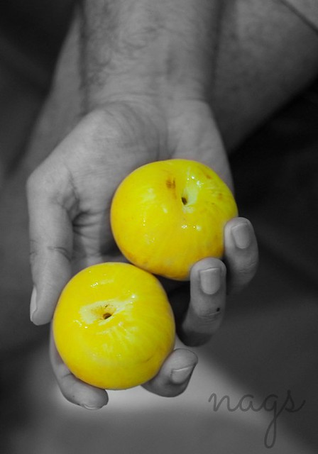 Yellow Plum Picture