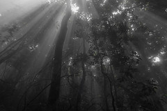 Steamy Jungle, Ba V National Park (vnkht) Tags: trees light mist mountain clouds forest landscape lumix nationalpark raw panasonic vietnam jungle rays 24mm hanoi f71 2012 lightrays lightroom bavinationalpark bavi vitnam hni lx5 bav vnqucgia huyn dmclx5 lightroom4 vnqucgiabav gavinkwhite