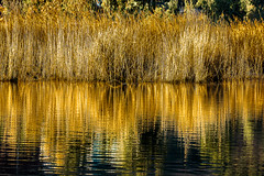 Golden reflection.. [Explored] (Murtaza Mahmud) Tags: travel pakistan lake mountains reflection trekking landscape hiking flickrexplore sighseeing goldenreflection