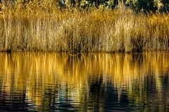 Golden reflection.. [Explored] (Murtaza [450k+ views]) Tags: hiking lake landscape mountains pakistan travel goldenreflection reflection sighseeing trekking flickrexplore asia southasia inspiringtravel vacation forest travelerphoto ultimateshot walk myperspective experimentalphotos lightroom