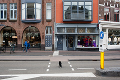 (Peter de Krom) Tags: cat oscar utrecht crossing cross