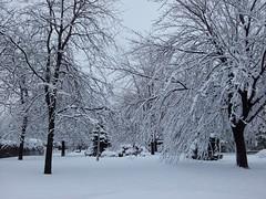 Tout Blanc De Neige  Anjou. 2013-02-28 10.06.12 (Sandbanks Pro) Tags: park city winter snow canada tree nature day montral quebec hiver neige paysage arbre parc ville anjou