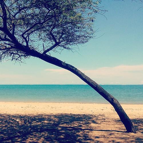 Lasiana Beach, Kupang #beach #lasiana #kupang #sea #igdaily #igelinesia #icnature #instagood #instamood #instadaily #instacanvas #instanature #instaprints #instagramhub #instanusantarabali #indonesia_photography #instanusantaralandscape #instanusantaranat
