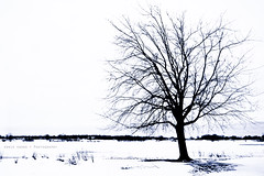 Tree by the Frozen River (Ernie Kwong Photography) Tags: winter bw white snow ontario canada cold tree ice nature st contrast canon landscape blackwhite lawrence cornwall quiet snowy 5d february frigid isolated stlawrenceriver hikey 1740mmf40l 5dmk2