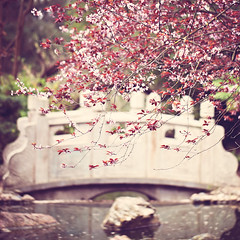Blush (Melanie Alexandra Photography) Tags: sanfrancisco goldengatepark macro nature springtime naturephotography