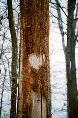 I (BryanBowman) Tags: tree film nature 35mm photography still shoot heart i