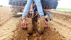 0043VIÑEDOS-plantar-injertos-(22-3-2013)-P1020048 (fotoisiegas) Tags: viticultura viñas viñedos cariñena plantar injertos fotoisiegas lospajeras