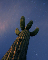 Reach for the Sky (Paul Hurd) Tags: longexposure blue light arizona cactus sky mountains southwest color detail green art nature beautiful beauty lines closeup night clouds composition cacti canon dark stars landscape grey lights star crazy amazing cool interesting focus colorful exposure heaven desert dynamic image tucson dusk earth awesome extreme wide deep wideangle dirty depthoffield frame gradient huge moonlight jagged glowing neat limbs t3 burst saguaro lush spines heavy majestic hue prickly imagery highiso eyecatching shootingstar compostions lookingupward reachforthesky skyporn handshaped