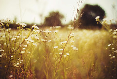 where are you, spring? (yoostynaa) Tags: nature grass 50mm bokeh meadow nikond80