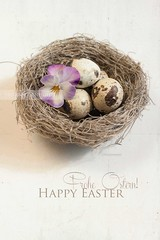 Happy Easter! ({Miss Honey}) Tags: easter nest pansy violet eggs greetings textured happyeaster lesbrumes