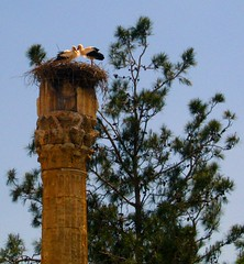 [6779] Storks returned to home (MFahlio) Tags: bird silifke soe stork migratorybirds