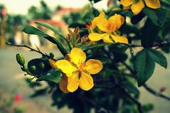 DSC00630 (Kun242) Tags: apricot blossom