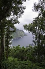 Waipi'o Through The Trees (worm600) Tags: hawaii bigisland waipio valley