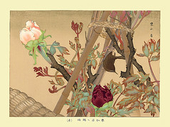 Tree peony and winter wren (Japanese Flower and Bird Art) Tags: flower tree peony paeonia suffruticosa paeoniaceae bird winter wren troglodytes troglodytidae rakusan tsuchiya nihonga woodblock print japan japanese art readercollection