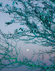 untitled (5 of 7) (Johann Kp) Tags: tallinn estonia early morning explore sunrise light flash moon sky colour colours mood moody canon 5d mk2 2470