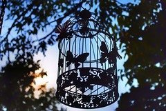 La gabbia (Carlo Cabrini) Tags: gabbietta uccellini contrasto hdr nikon