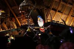 "Walt Disney's Enchanted Tiki Room • <a style=""font-size:0.8em;"" href=""http://www.flickr.com/photos/28558260@N04/29225062425/"" target=""_blank"">View on Flickr</a>"