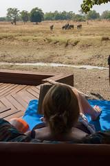 Zambia_LionCamp_293_elephant (atkiteach) Tags: zambia southluangwanationalpark southluangwa safari safaricamp camp nature naturereserve holiday rural africa lioncamp elephant elephants