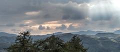 storm at alcock tarn (loftylion9) Tags: grasmere lakedistrict sunrise mist sunset lonetree tilberthwaite castleriggstonecircle langdalepikes