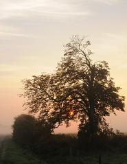 Morgenstund hat Gold im Mund - Rosskastanie (Aesculus hippocastanum) bei der Morgentoilette, die gewissenhaft vollzogen werden sollte; Bergenhusen, Stapelholm (48) (Chironius) Tags: stapelholm bergenhusen schleswigholstein deutschland germany allemagne alemania germania    ogie pomie szlezwigholsztyn niemcy pomienie morgendmmerung sonnenaufgang morgengrauen  morgen morning dawn sunrise matin aube mattina alba ochtend dageraad zonsopgang   amanecer morgens dmmerung nebel fog brouillard niebla gegenlicht silhouette rosids malvids sapindales seifenbaumartige sapindaceae seifenbaumgewchse hippocastanoideae rosskastaniengewchse acer ahorn baum bume tree trees arbre  rbol arbres  rboles albero  rvore aa boom trd