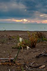 _DSC0970 (. ..::..::::....:::::m.trinciarelli photo::..:..) Tags: mare tramonto cielo spiaggia maredinverno pace