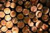 DSC_110301 (pirka-makiri) Tags: sapporo hokkaido japan forest