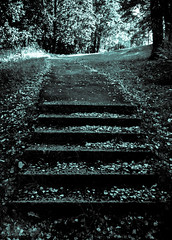 Small steps for mankind,... (Jori Samonen) Tags: steps path tree leaves alppipuisto park helsinki finland sony ilce3000 e 1855mm f3556 oss sonyilce3000 e1855mmf3556oss leaf