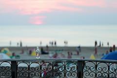 HFF (eleni m) Tags: hff fence summer hot evening beach sea water sky bottle people dof seasideresort heatwave hittegolf clouds zandvoort warm outdoor mensen badplaats september