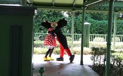 fantasy garden- mickey/ minnie/ pluto (alienalice) Tags: hkdl hkdisneyland duffy gelatoni tinkerbell mickey minnie donald daisy woody jessie 迪士尼家送匯演