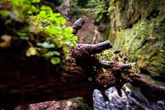 Somewhere In The Middle (_Shak_) Tags: longexposure finnichglen scotland burn stirlingshire brook devilspulpit stream river