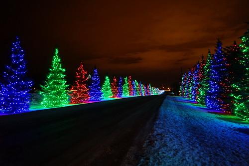 Spruce Meadows Lights, Calgary (j.canada) christmas new trees winter light canada color calgary night zeiss lens lights sony year meadows ab alberta carl translucent alpha za spruce f28 slt 2012 2470mm variosonnar 22x sal2470z variosonnart28222470