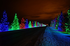 Spruce Meadows Lights, Calgary (j.canada) Tags: christmas new trees winter light canada color calgary night zeiss lens lights sony year meadows ab alberta carl translucent alpha za spruce f28 slt 2012 2470mm variosonnar 22x sal2470z variosonnart28222470