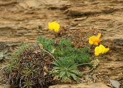 Little flowers on Balnakeil beach