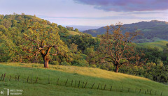 Two Oaks at Sunset (James L. Snyder) Tags: california ranch park old blue trees sunset red orange usa brown foothills mountain painterly mountains green grass yellow horizontal rural forest fence evening wooden spring oak quercus purple native pastel bare country rustic rich tan lavender mint sanjose hills ridge cranberry valley barbedwire bayarea april verdant mountainside hillside oaks pastoral posts grassland idyllic atmospheric rolling gnarled textured clearing bucolic 2012 dormant venerable intricate savanna oldgrowth beckoning santaclaracounty countypark magiclight diablorange mtmisery josephgrantcountypark hallsvalley artistslight treesonhills