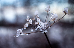 winter flower (Ray Byrne) Tags: winter snow ice yarrow raybyrne byrneoutcouk webnorthcouk