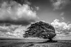 Windblown (RoamingTogether) Tags: blackandwhite landscape hawaii nikon bigisland tamron hdr southpoint kalae nikond700 283003563