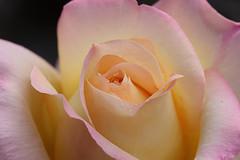 (Jaio.Ne) Tags: me2youphotographylevel3 me2youphotographylevel1 me2youphotographylevel4 flowerthequietbeauty