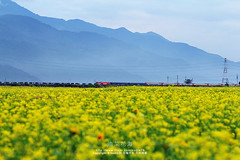 (nodie26) Tags: flowers flower yellow train canon tour cole taiwan                         60d    taowam