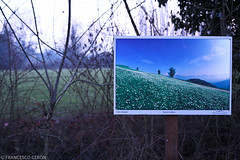... (Francesco | Ceron) Tags: blue winter grass horizontal pictureinpicture efs1755mmf28isusm francescoceronphoto