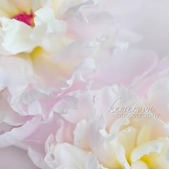 ...    ... (Kemerova) Tags: light flower macro contrast square photography flora nikon bokeh fineart squareformat conceptual 2012 plovdiv flowersadminfave creativeedit kemerova