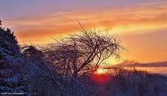 Good Start (Explored 5th Feb #175) (Glenda Hall) Tags: trees ireland winter sun sunlight snow cold clouds sunrise branches gimp northernireland february ulste